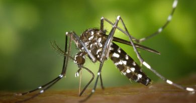 Ethiopia Must Do More to Stop Recurring Chikungunya Outbreaks