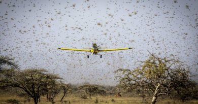 Additional Aircraft to Join Fight Against Locusts