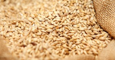 Govt Issues New Tender to Buy 400,000tn Wheat